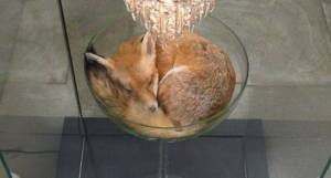 Fox and Chandelier
