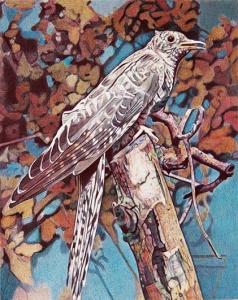 boo-saville-cuckoo-1