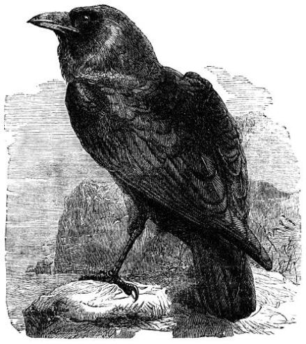 the_raven